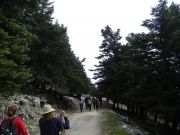 Διαδρομή στο ελατοδάσος του Αίνου